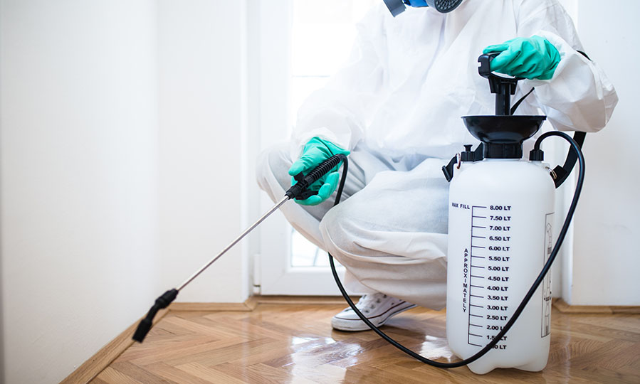 Aimpests team member sanitizing a room